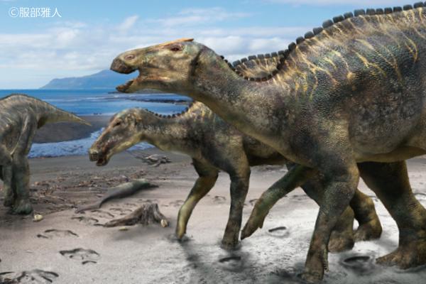 カムイサウルスの全身骨格 Ⓒ服部雅人