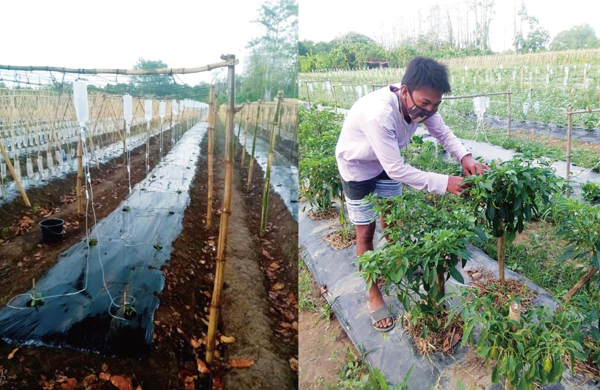 開発した液剤を畑に投与する様子。植物が大きく育っている。