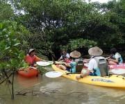 カヌーを使ったマングローブ林の植生調査